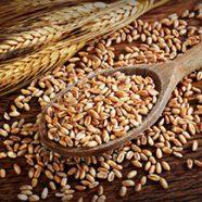 Glutensensitivität gibt es wirklich ?!